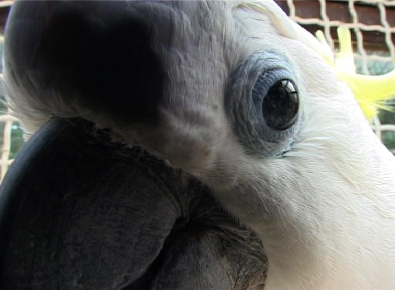koki-closeup2